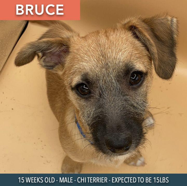 Bruce 3