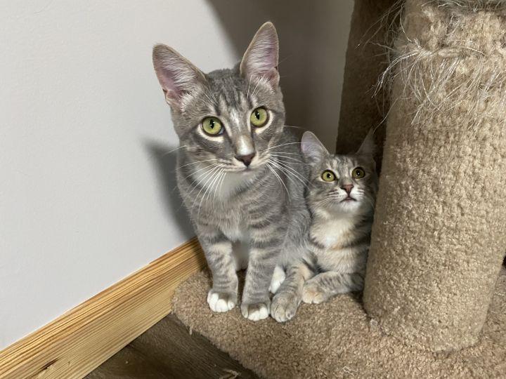 Sally & Peppy 3