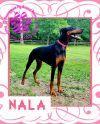 Nala ADOPTION PENDING