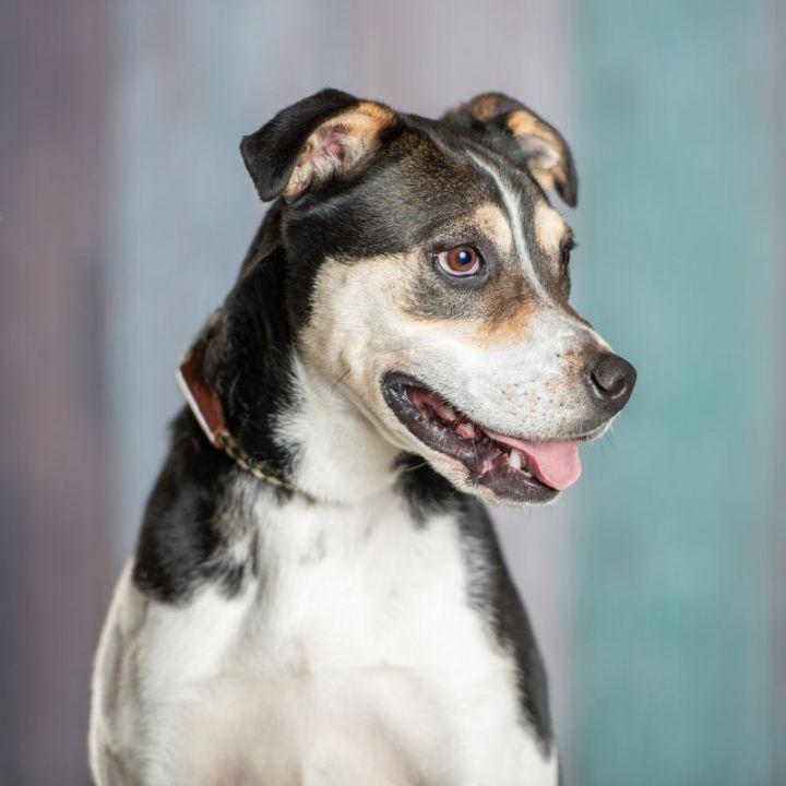 Baxter 4