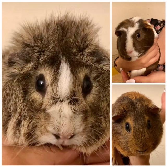 Gwenny, Ginger, Hazel (bonded)