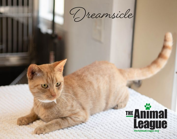 Dreamsicle 2