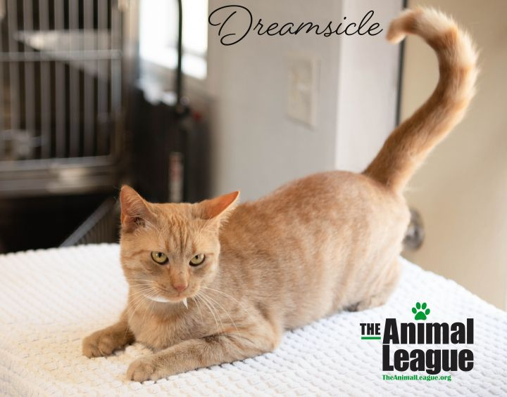Dreamsicle 3
