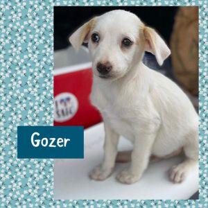 Gozer