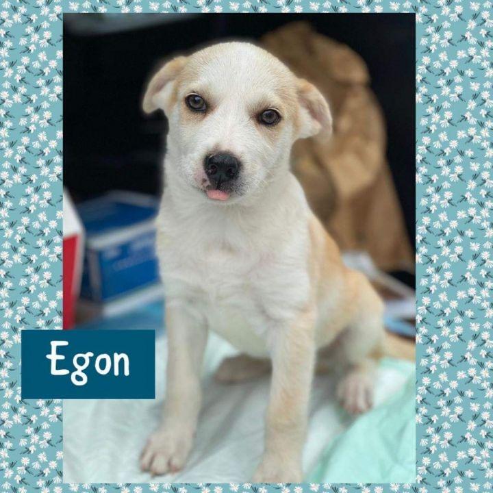 Egon 1