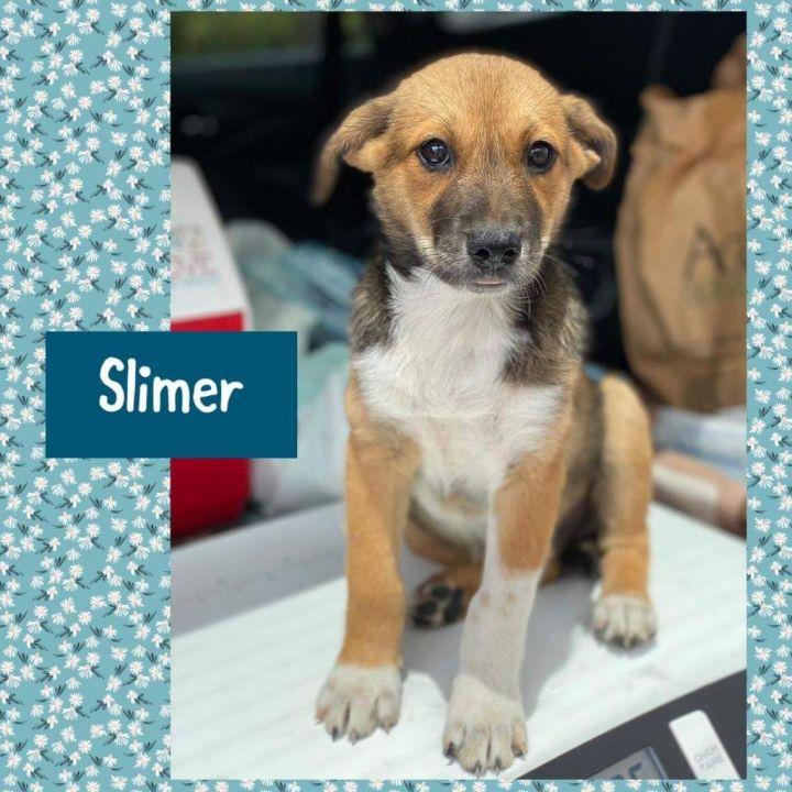 Slimer 1