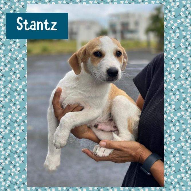 Stantz