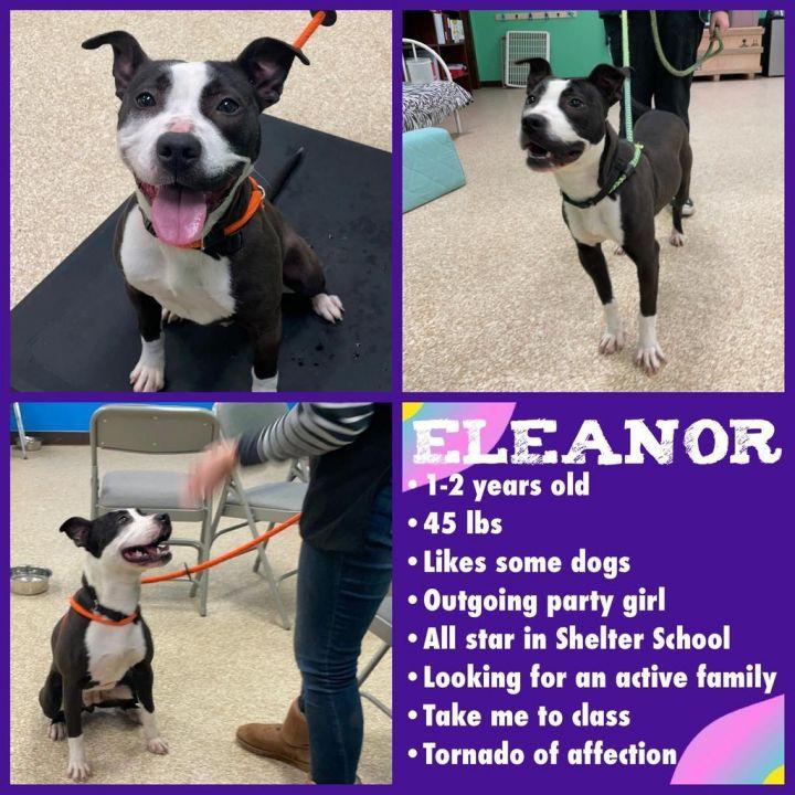 Eleanor 5