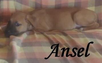 Ansel 2