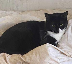 Trixie Tuxedo Cat