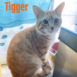 Meet adorable and fun Tigger  Like the cartoon  this boy is goofy and sweet and loves to bounce