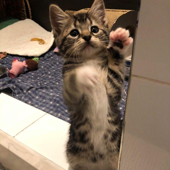 Betty - Royal Kittens 3
