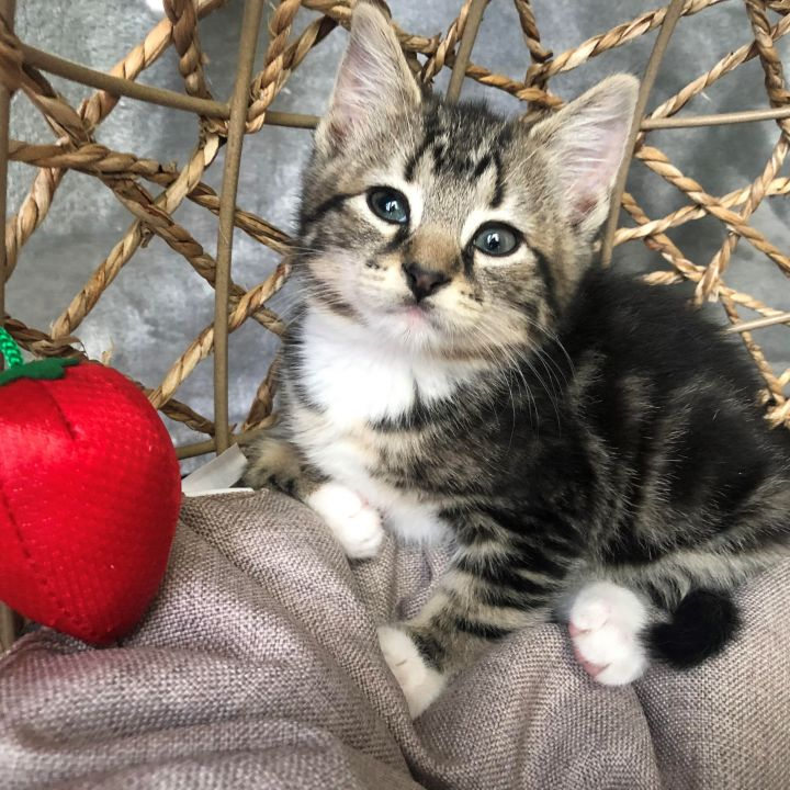 Betty - Royal Kittens 4