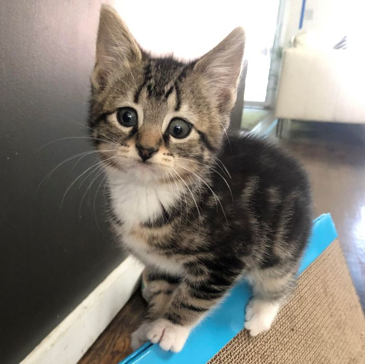 Betty - Royal Kittens 6