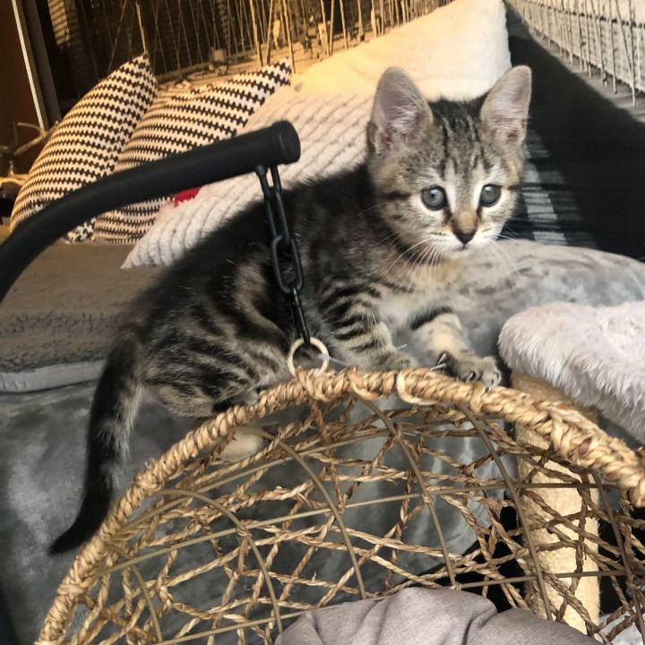 Pippa - Royal Kittens 4