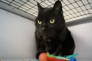 Jack is 8yr old senior fellow that came to us due to his owner moving He is quiet guy that