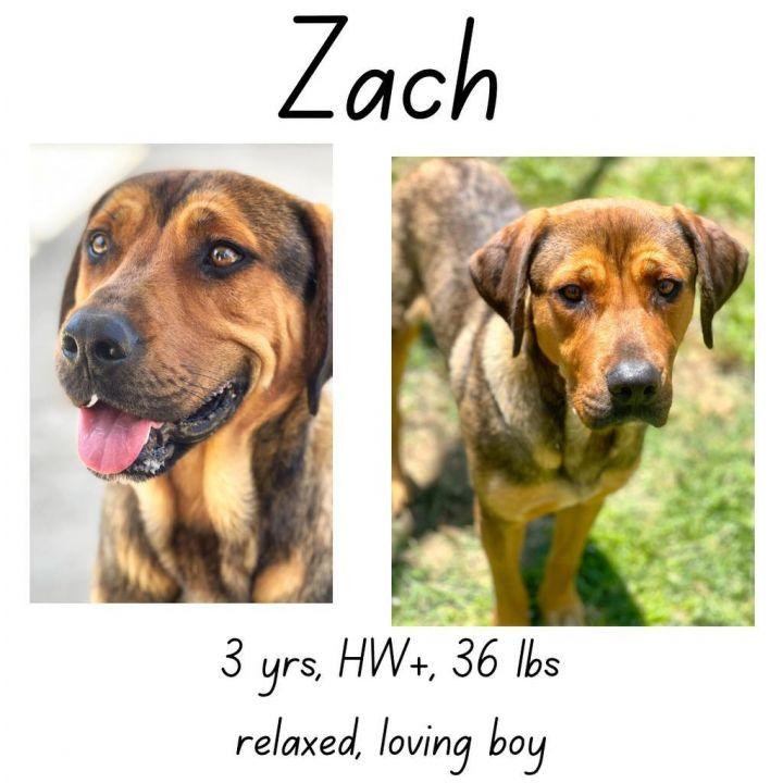 Zach 1
