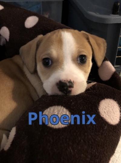 More Pups 2