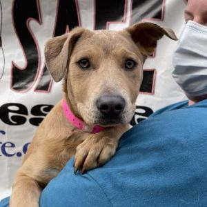 Meet me in Patterson NY by Appointment Looking to add a new 4-legged member to your family Its