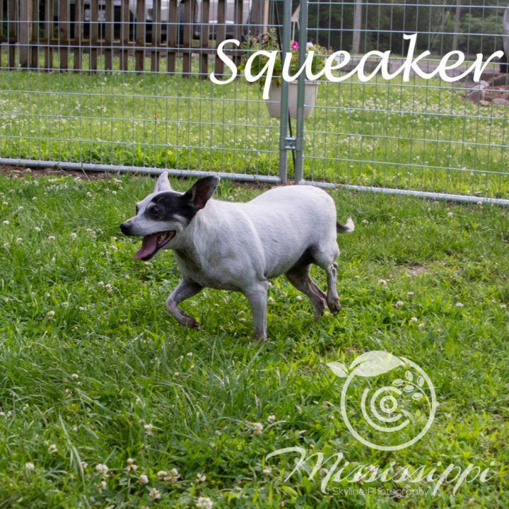 Squeakers 4
