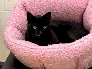 Zippy is a nice cat who is about 9-10 years old She is here at the shelter with her friend