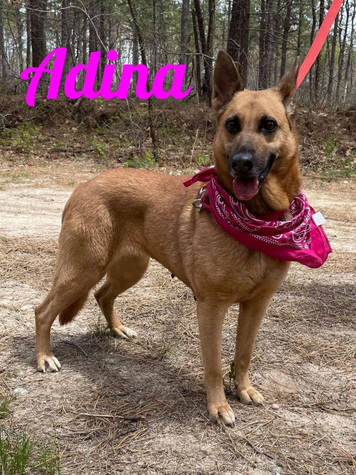 Adina 1