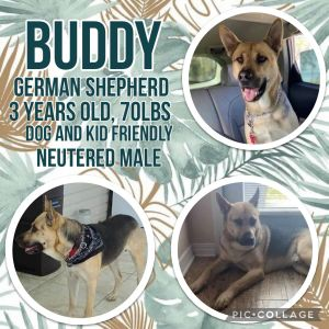 Buddy Microchipped Yes Crate Trained Yes Barking Only barks when he has to go outside Leash Trai