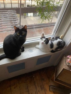 These two small gentle-but-energetic cats are bonded and look after one another in all the best way