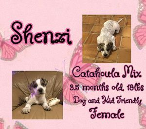Meet Shenzi She is an active pup that loves to play with her sibling but loves to snuggle also She