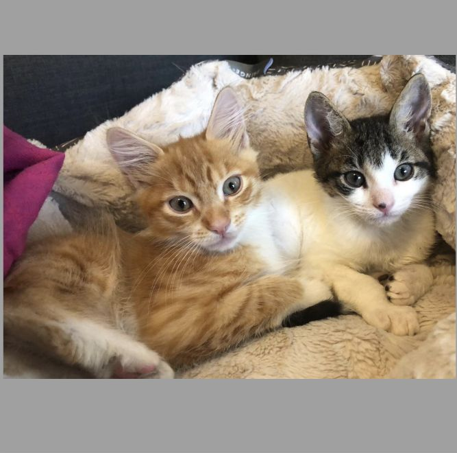 Arthur & Molly Weasley - Bonded Pair