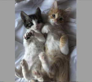 Molly & Arthur Weasley - Bonded Pair