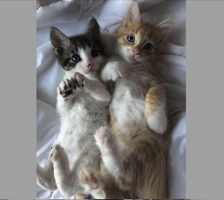 Molly & Arthur Weasley - Bonded Pair 1