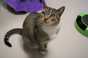 Hemlock is a four year old spayed female looking for her forever home She is a
