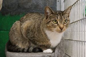 Hemlock is a four year old spayed female looking for her forever home She is a nice girl with a
