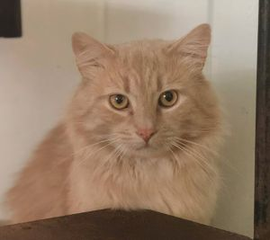 Say hello to Bob Dylan This 2 year old boy was brought to us as a stray He is still
