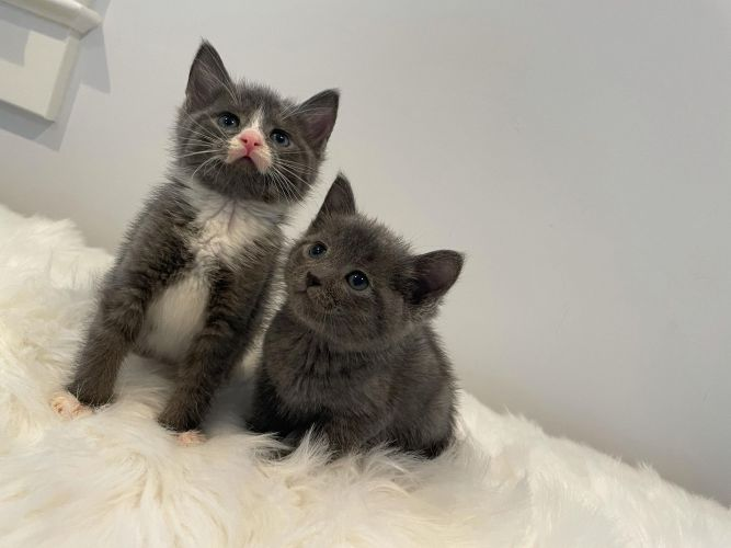 Oliver & Charlie
