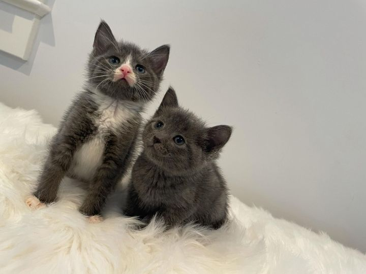 Oliver & Charlie 1