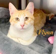 Flynn 1