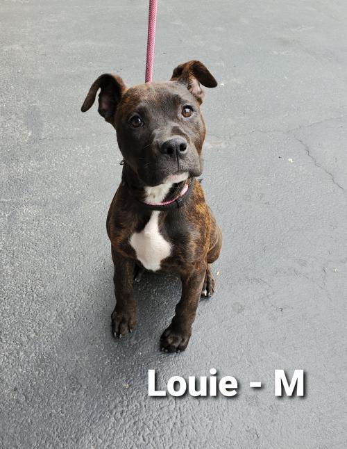 Louie - pending