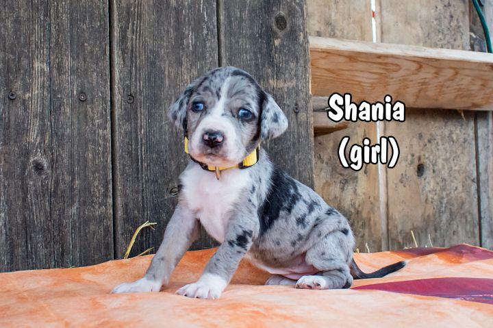 Shania 1