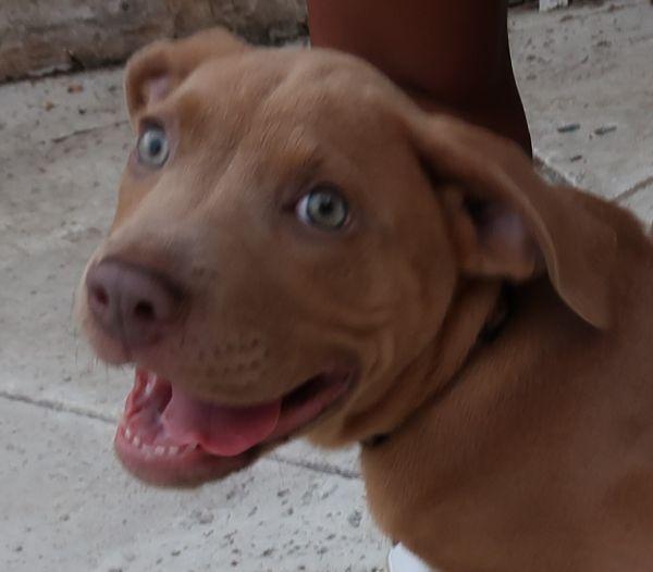 Lina! ASD Nanny Pup!  A+ With Cats!