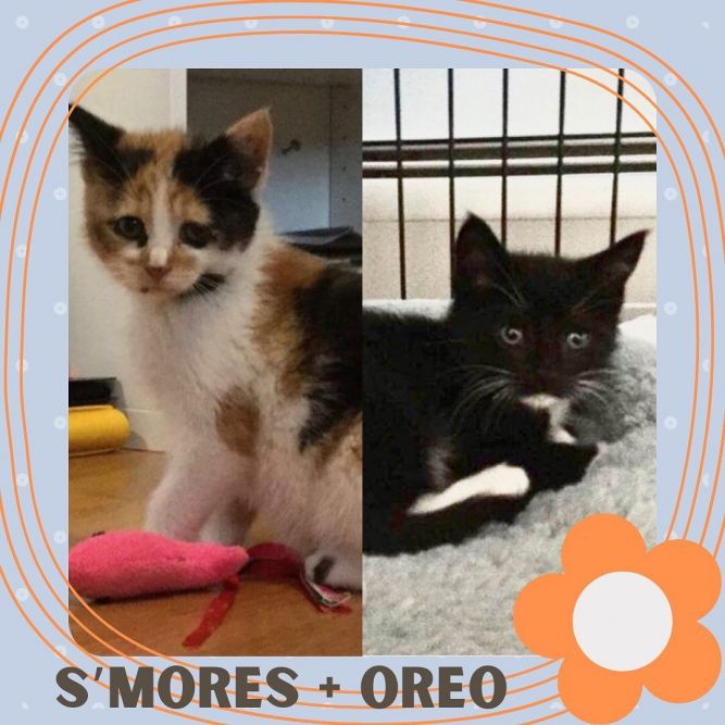 S'mores and Oreo