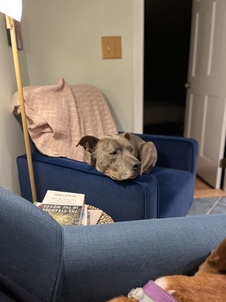 Duke, mellow and sweet companion 6