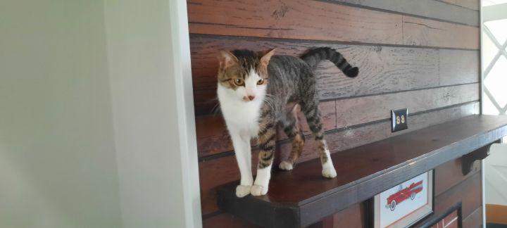 Jaclyn NJ Kitty 3