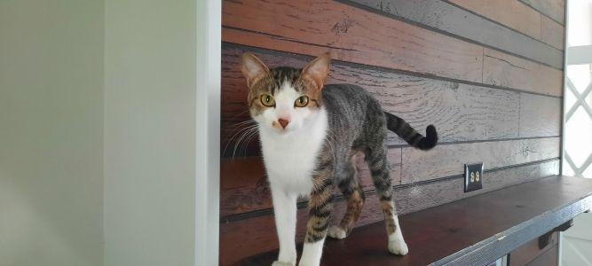 Jaclyn NJ Kitty