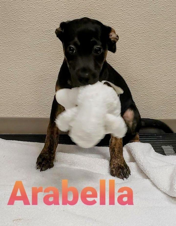 Arabella 1