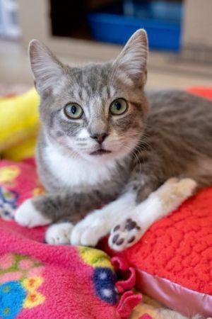 Mojo Jojo Tabby Cat