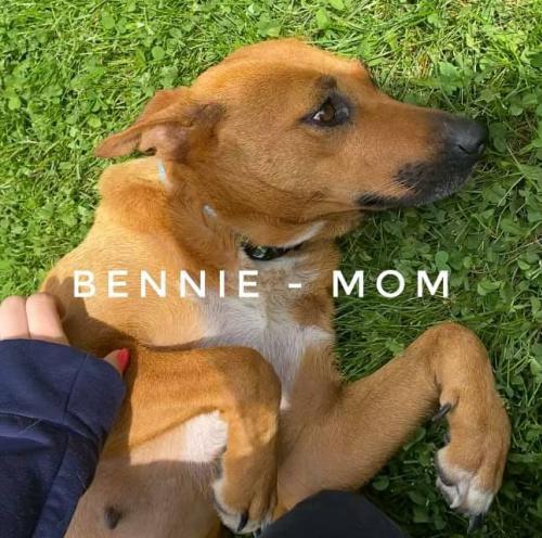 Bennie 1