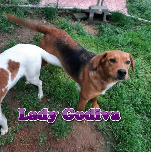 Lady Godiva 1