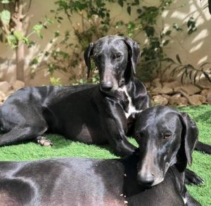 Blue & Willow - bonded pair